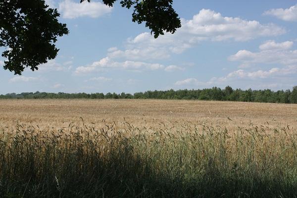 Blick auf das Landschaftsschutzgebiet Karolinenhöhe in Berlin Spandau